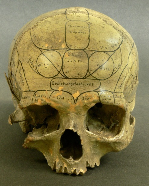professorquack:  Phrenological skull. Anonymous (19th century). Photograph by Eszter Blahak/Semmelweis Museum.