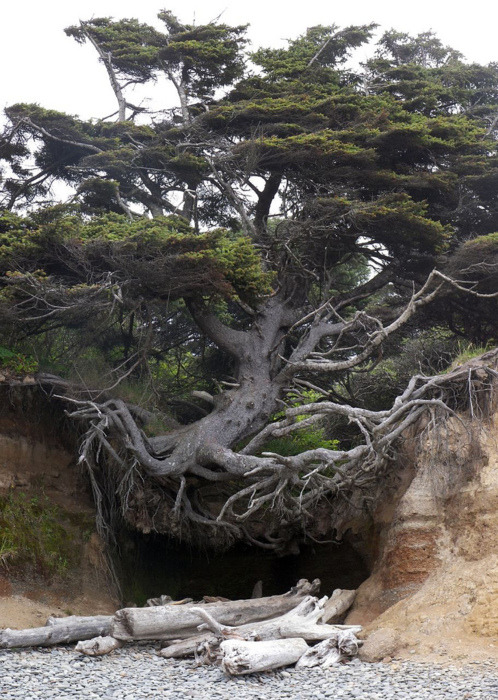 Tree Root Cave, Big Sur, California photo via abasa