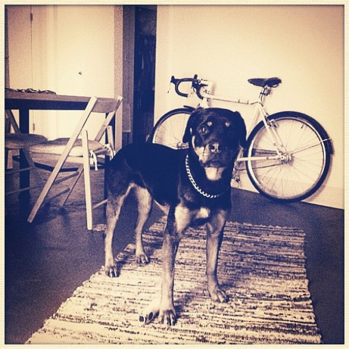 Buy my bike, not my pup #forsale #raleigh #oneway #singlespeed #fixed (Taken with instagram)