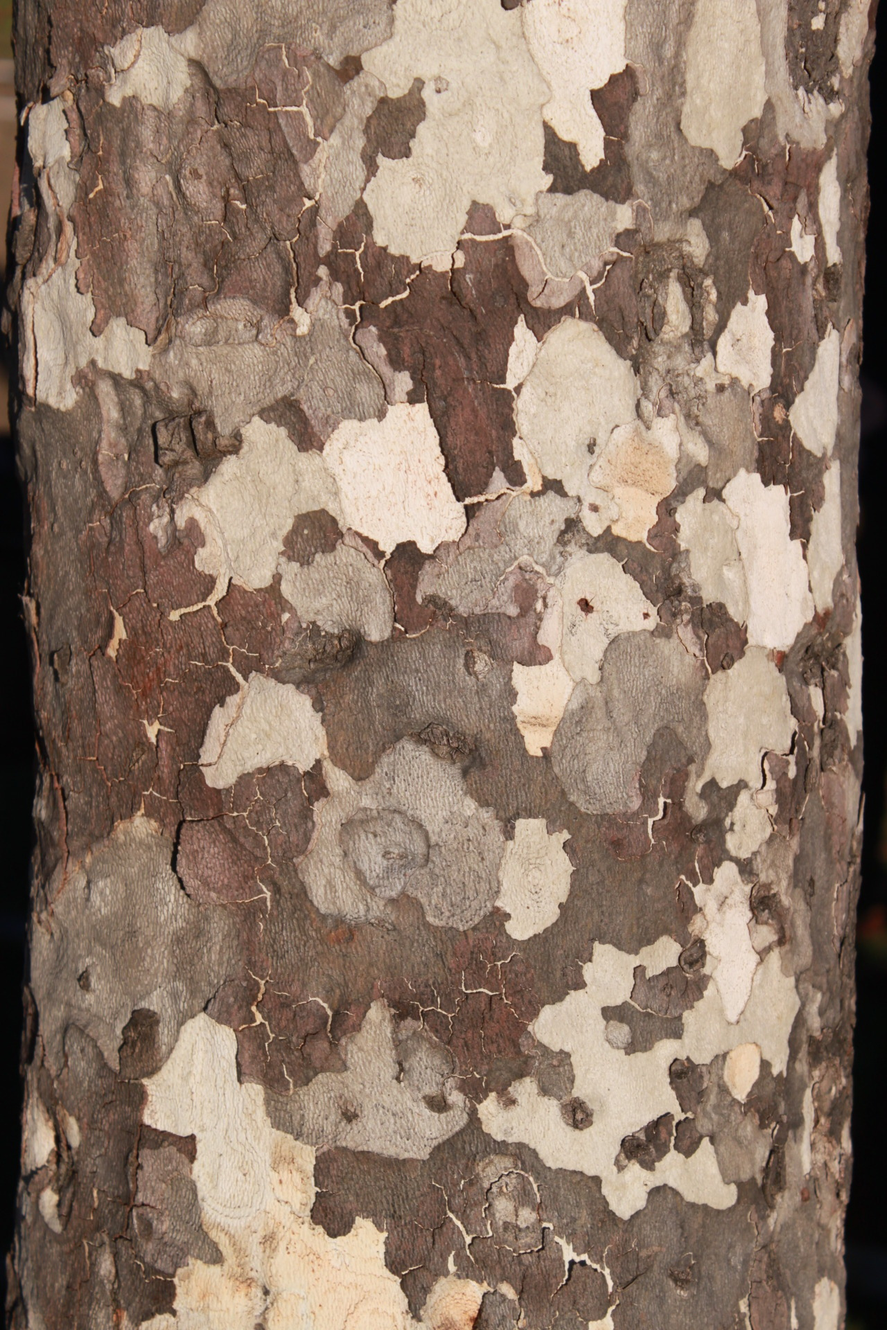 Day 29, 01/29/2012 For all of you who think a trees bark is brown… I'm not sure what kind of tree this is but it is so beautiful.
