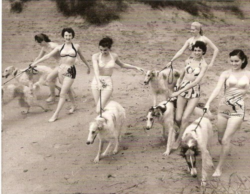 Tiller Girls walking Borzoi dogs, 1950s