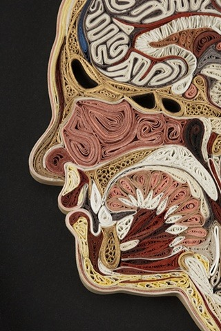 laughingsquid:  Tissue Series, Anatomical Cross Sections in Paper Filigree