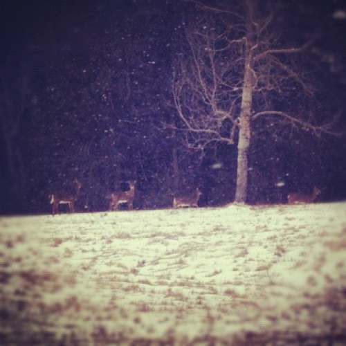 #maine#winter#landscape#snow#deer#forest