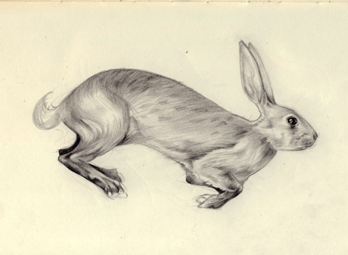 Sketch I worked from for the rabbit embroidery. It's a mix of reference and imagination to get the kind of thing I was thinking of :)