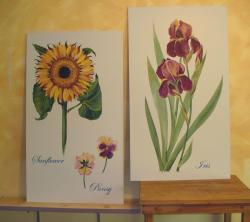 Reproductions of flower illustrations to be framed and hung in little girl's room.