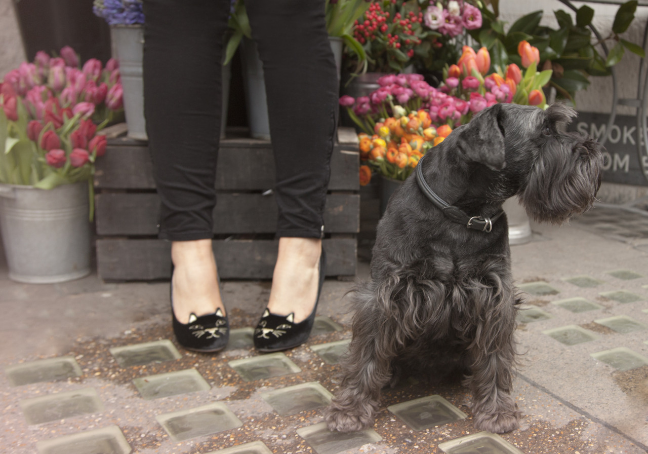 From today's feature on Glitter Guide: my Charlotte Olympia Kitty heels making friends with London's adorable small dog population