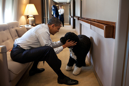 New behind-the-scenes photos from the White House from December 2011 (or, as we like to think of it: new excuse to post a photo of Bo).