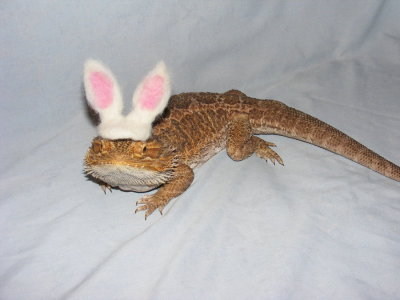 fuckyeahneedlefelting:  Easter Dragon by *Artist4Life05