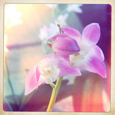 Tiny orchid on Flickr.