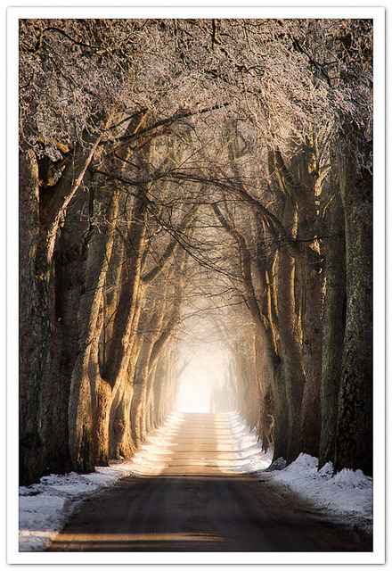 ~ The Road to Sanderumgård ~ by .Ian Mylam. on Flickr.