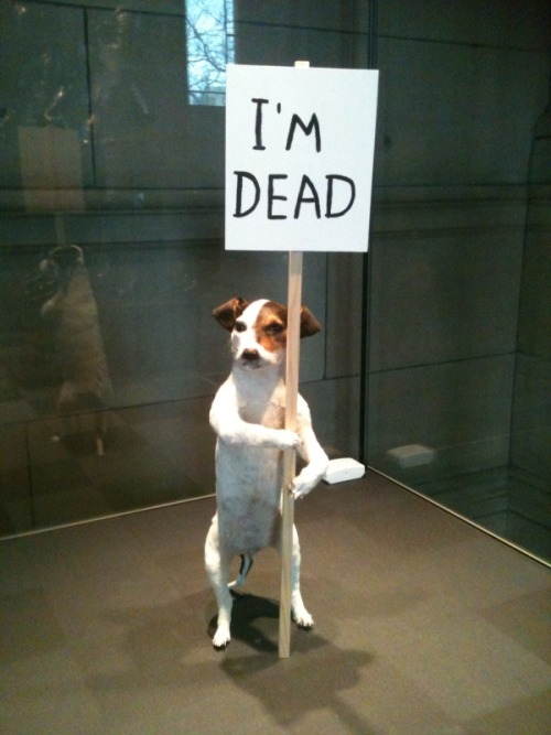 David Shirgley, I'm dead | 2010