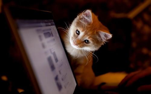 fifela.tumblr.com