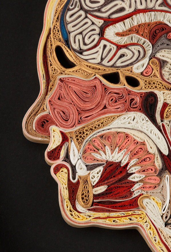 agenerousdesigner  Anatomical Cross-Sections Made with Quilled Paper by Lisa Nilsson