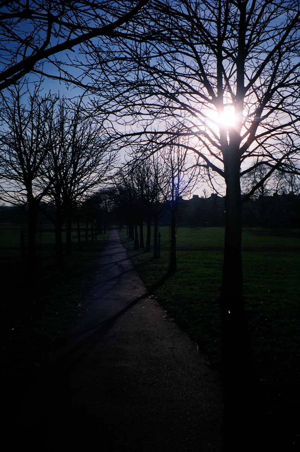 Peckham Rye park and the sun