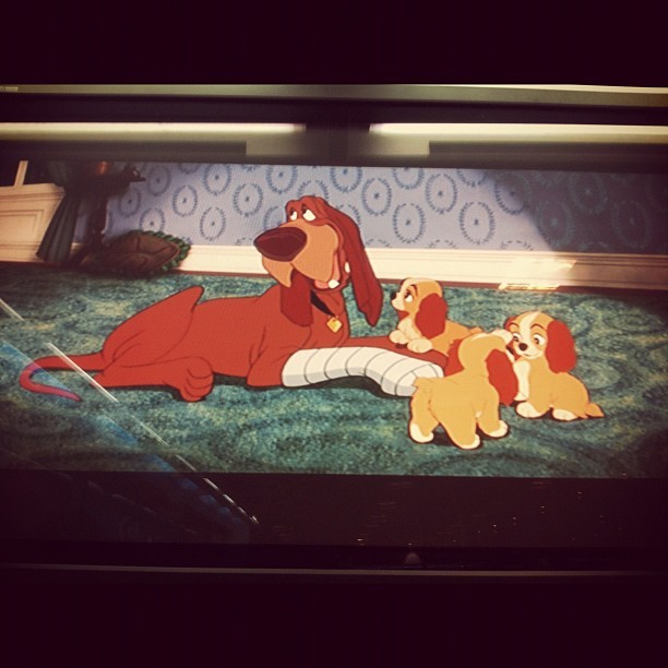 #phopho #fofo #cute #damaeovagabundo #ladyandthetramp  (Taken with Instagram at Fnac)