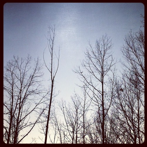 #trees #sky #birds #clouds  (Taken with instagram)