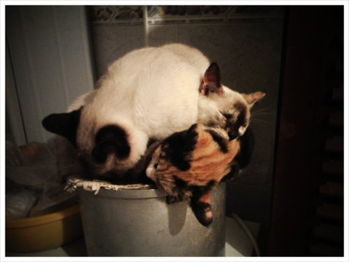 3 cats sleeping in a pan… (Taken with picplz.)