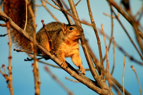 One of our fav. URBAN Nature's animal!  Did you know: Squirrels can swim - and they are either right or left handed.   Photo : Nisso Larden, Co, USA