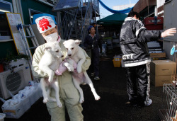 (via Pet Rescuers Venture Into Japan's Exclusion Zone - In Focus - The Atlantic)