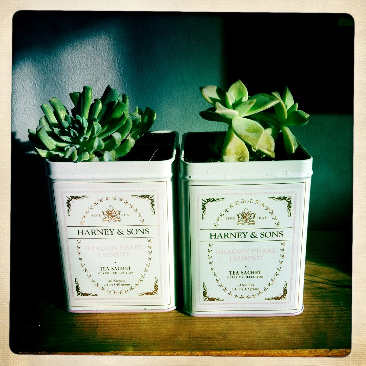 sharkpants:Reusing Tea tins for Succulent plants!