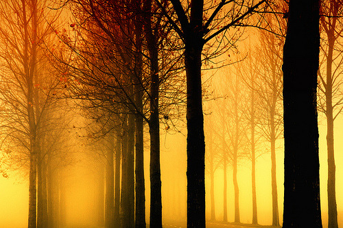 Tree lines in the fog (by !.Keesssss.!)