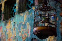 cultural-escapist:  Bird in a cage in Hanoi's Old Quarter, Vietnam by Adam Cathro on Flickr.