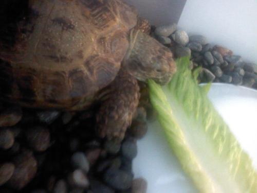 He freaking LOVES Romaine Lettuce :3 It's amazing, because I do too.