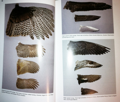 Seriously. It's finally here. I finally have my bird feather identification book. Now my growing collection won't go name-less.I CAN NOT wait for spring.