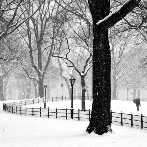"""Central Park in Snow"" by Randy Le'Moine Photography."