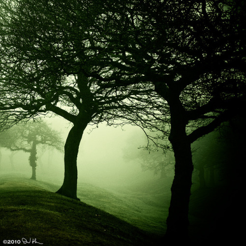 Dark winter woods - The Antonine Wall, Bonnybridge, UFO Hotspot v2 by David Hannah on Flickr.
