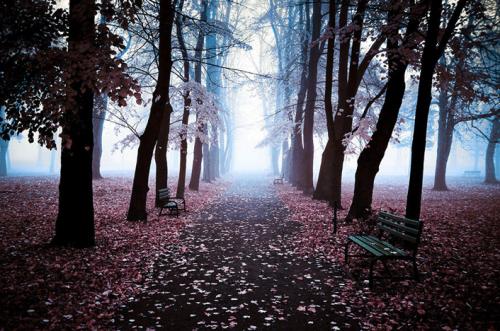 landscape trees natre fog