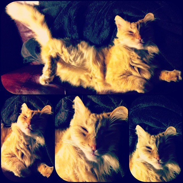 Creepy kitty dreamz (Taken with instagram)