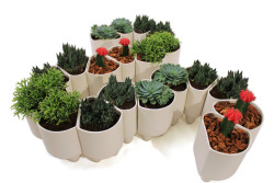 gooderdle:  Experimenting with 20 planters…
