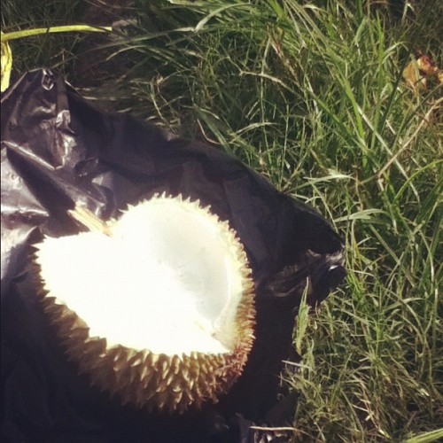 Nothing's gonna go wrong with durian! #iphonesia #igers #ig #instago #photooftheday #photo #hangout #fruit #durian #beautiful #smell #spike #delicious #cipinang #fun  (Taken with instagram)