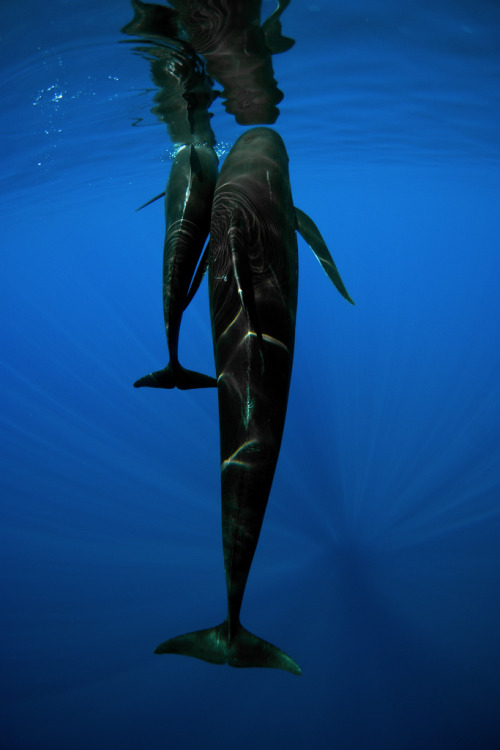 lovenature:  Pilot Whale Mother & Calf by Rory Moore
