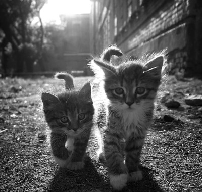 Two Super Cute Kitten On The Way Funny Pictures http://funnystuffandnews.blogspot.com Funny Stuff http://funnypix4u.tumblr.com FUNNY STUFF FANPAGE