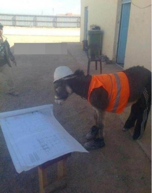 Construction Donkey   And you thought your boss was a jackass.