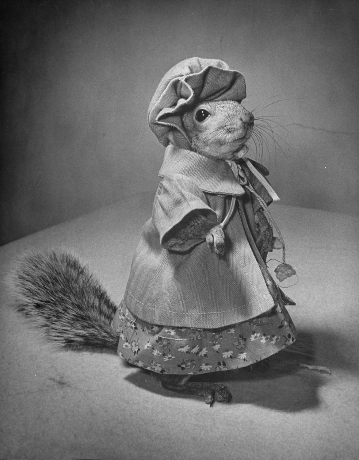 life:  Tommy Tucker may be a squirrel, but as this 1940 photo essay concludes, he may be more fashionable than you…