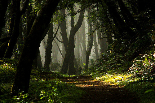 va-liant:  Enchanted Forest, Lincoln City, Oregon photo via vild