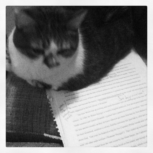 Ellie is editing my paper. (Taken with instagram)