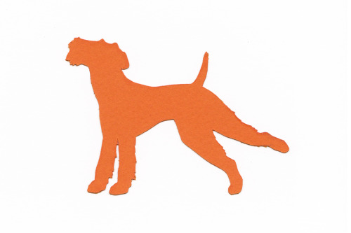 This is a silhouette cut out of my Airedale Terrier Rufus. Rufus is very graceful and often will do arabesques like this one. I made these into cards. I hope my mom doesn't find this blog. She is getting some Rufus arabesque cards for her birthday. 4x6 bristol board and card stock