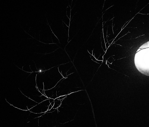 Tree and Streetlight on Flickr.