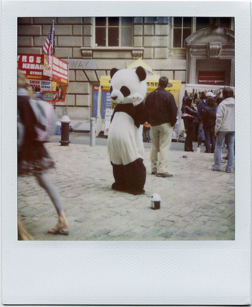 Pathetic Panda by davebias on Flickr.