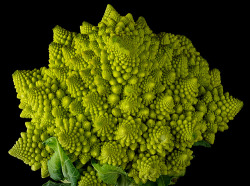 Fractal broccoli (by Captain Tenneal)