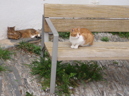 The cats of Cadaqués. Taken April 3, 2010.