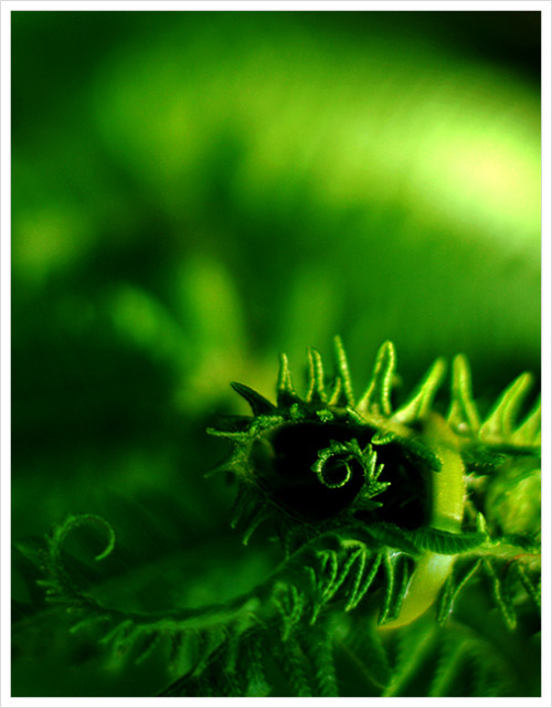 (via Green glow by ~333SunnyBunny on deviantART)