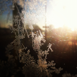 The frost is here.