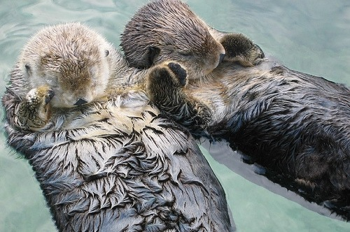 surferdude182:  Holding hands (by mindluge)