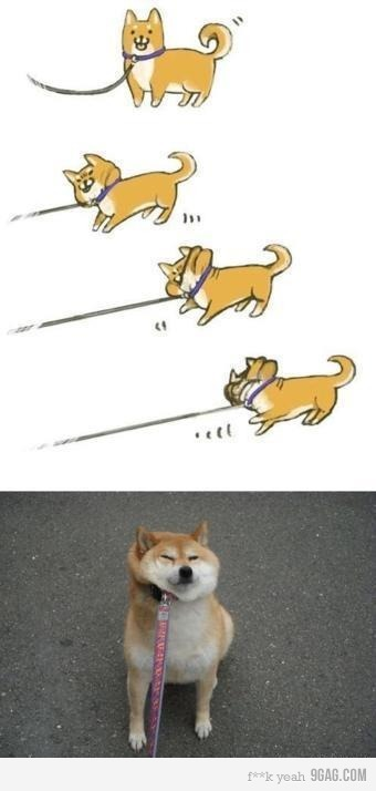 The Shiba Protest - Illustrated. (Thanks to my friend Takahiro for passing this along!)