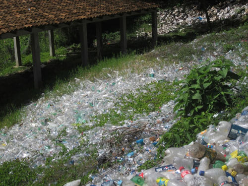 shortformblog:  Fun guy chillin' in South American rainforest finds plastic-eating fungi Seriously, though this is kind of a big deal. Know that big problem we have? You know, the one involving a crapload of used plastic hanging around in landfills with nowhere to biodegrade for a couple million years? Well, Jonathan Russell might've solved that problem. See, Russell and his fellow Yale students went to Ecuador, where they found a new kind of fungus they're calling Pestalotiopsis microspora. Big deal, you're thinking. Anyone can find fungus anywhere! Well, something his fellow students found out after the fact is that this fungus can live on a diet of polyurethane alone — and even crazier, it doesn't even need air to do so! In other words, we could potentially put it at the bottom of a landfill and cover it with plastic, and it would do the rest of the work. This might be game-changing if it works as advertised. (photo via Flickr user dbutt; EDIT: Updated with link to research abstract) source Follow ShortFormBlog